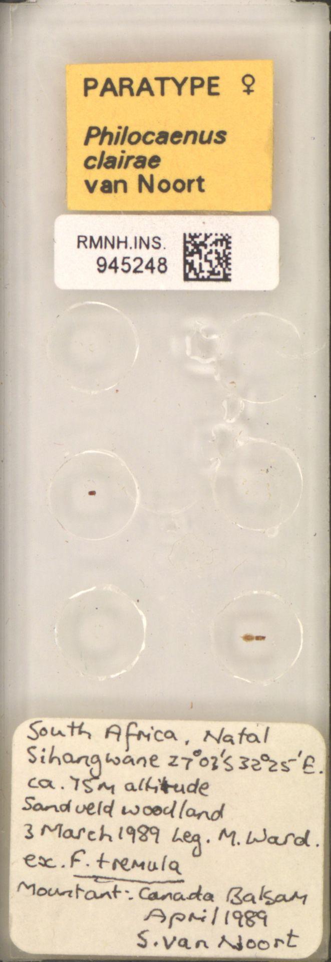 RMNH.INS.945248 | Philocaenus clairae van Noort