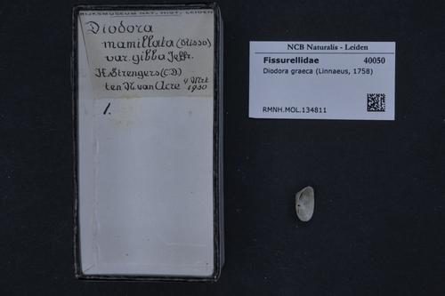 Diodora graeca image