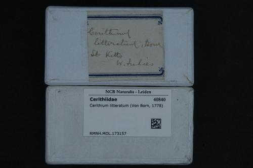 Cerithium litteratum image