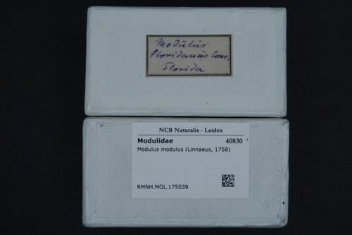 Modulus modulus image