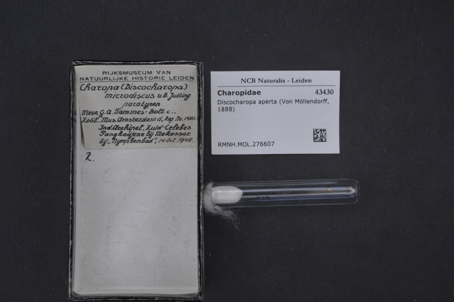 RMNH.MOL.276607 | Discocharopa aperta Von Möllendorff, 1888