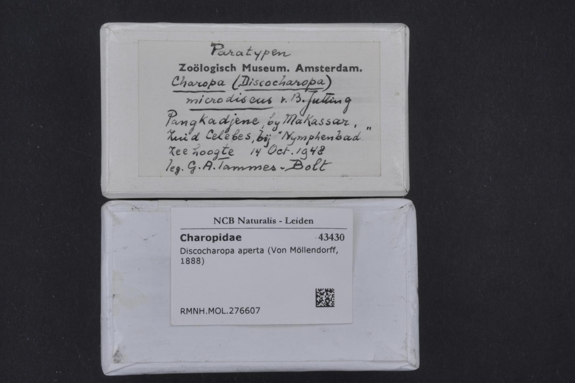 RMNH.MOL.276607   Discocharopa aperta Von Möllendorff, 1888