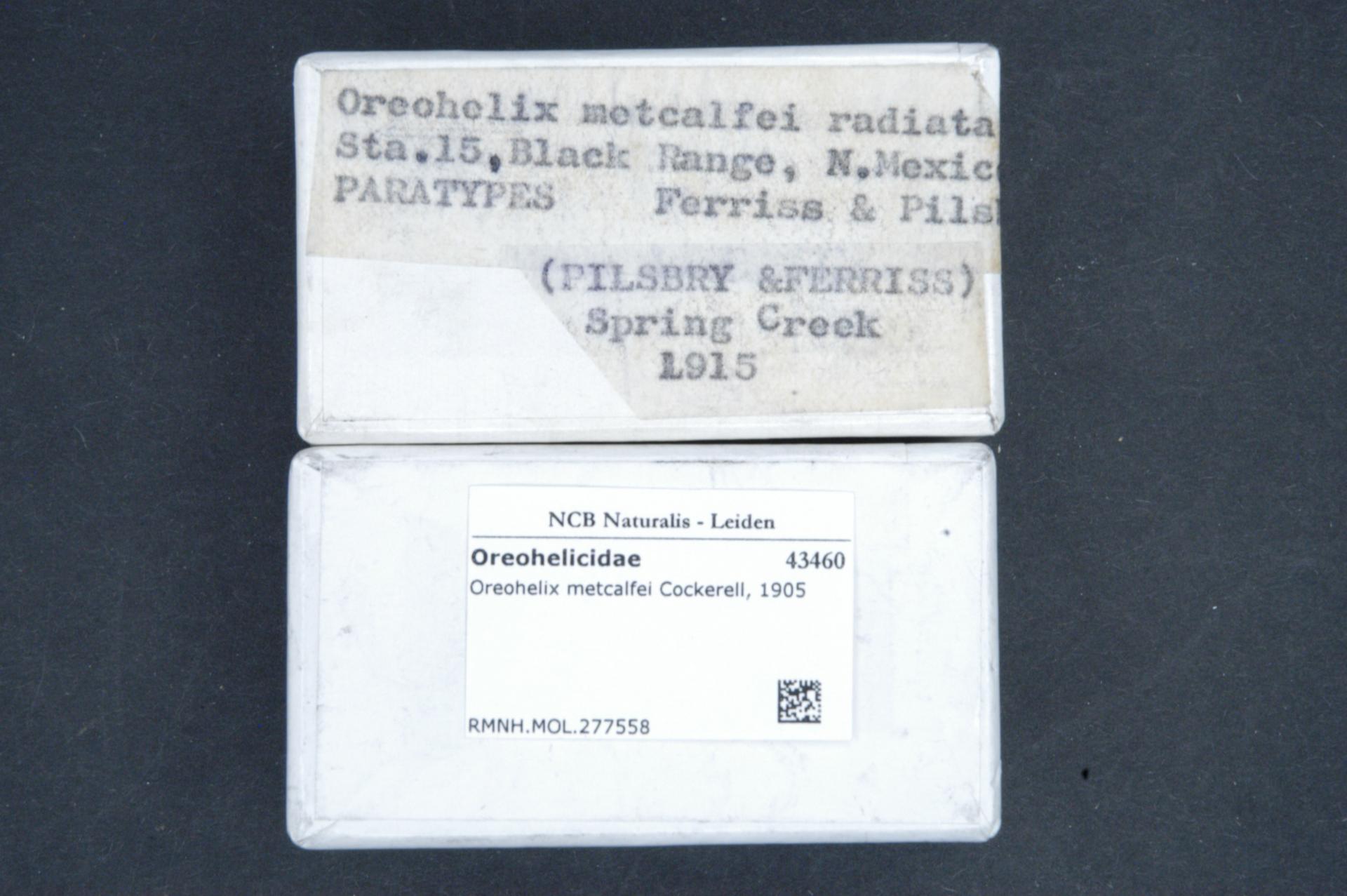 RMNH.MOL.277558   Oreohelix metcalfei radiata Pilsbry & Ferriss, 1917