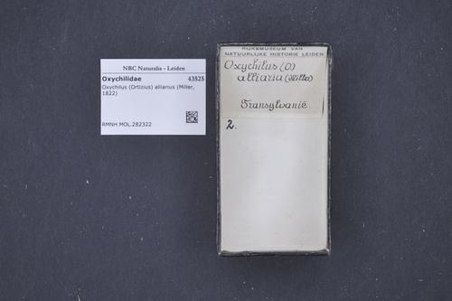 Oxychilus alliarius image