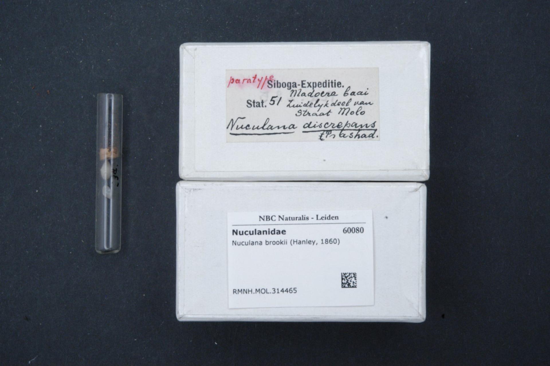 RMNH.MOL.314465   Nuculana (Ledella) discrepans Prashad, 1932