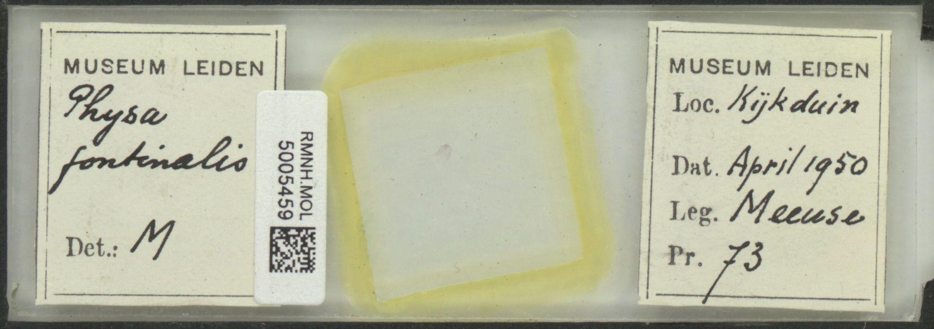 RMNH.MOL.5005459 | Physa fontinalis Linnaeus, 1758