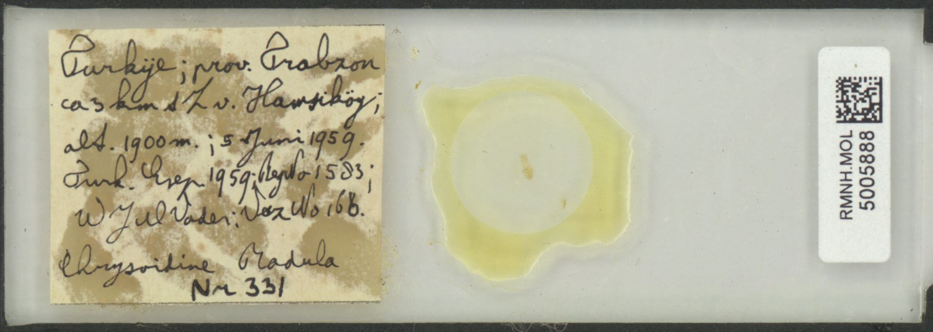 RMNH.MOL.5005888 | Imparietula altenai Gittenberger, 1967