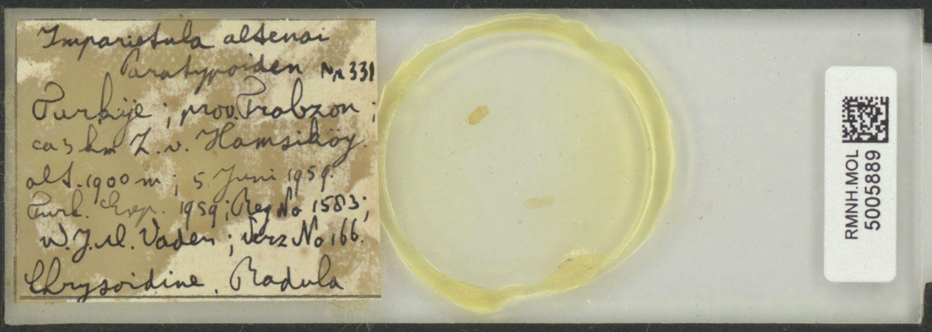 RMNH.MOL.5005889 | Imparietula altenai Gittenberger, 1967