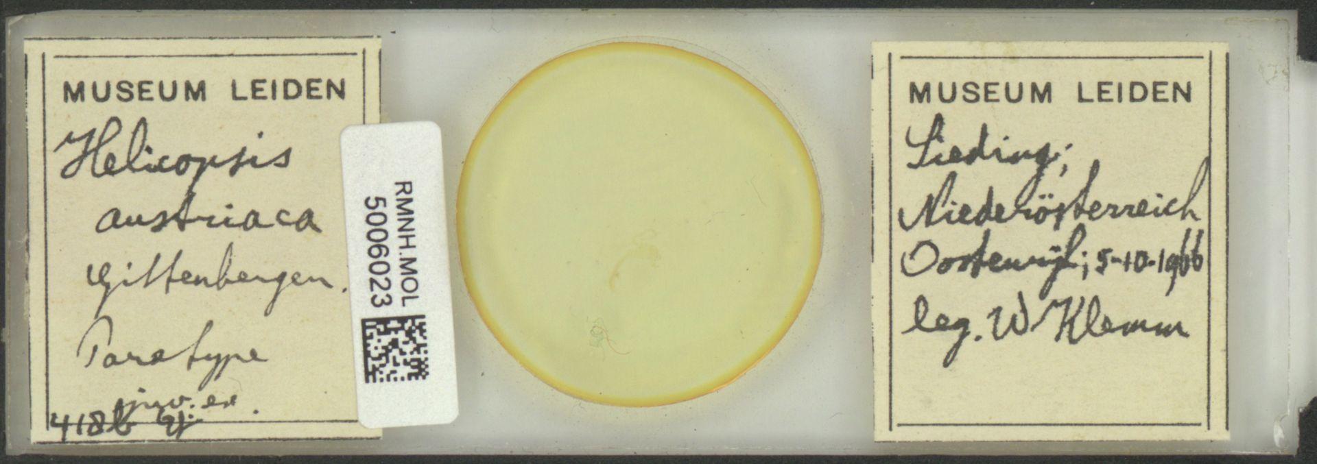 RMNH.MOL.5006023 | Helicopsis (Helicopsis) austriaca Gittenberger, 1969