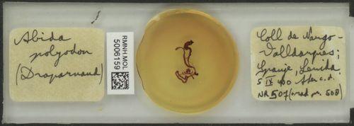 Abida polyodon image