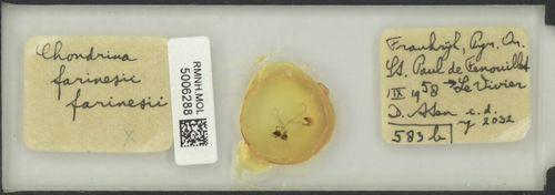 Chondrina farinesii image