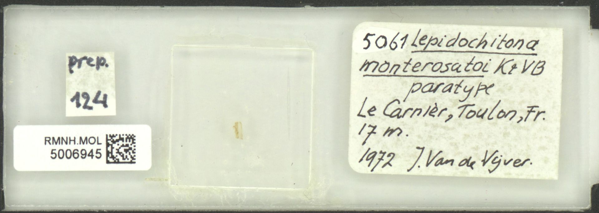 RMNH.MOL.5006945 | Lepidochitona (Lepidochitona) monterosatoi Kaas & Van Belle, 1981