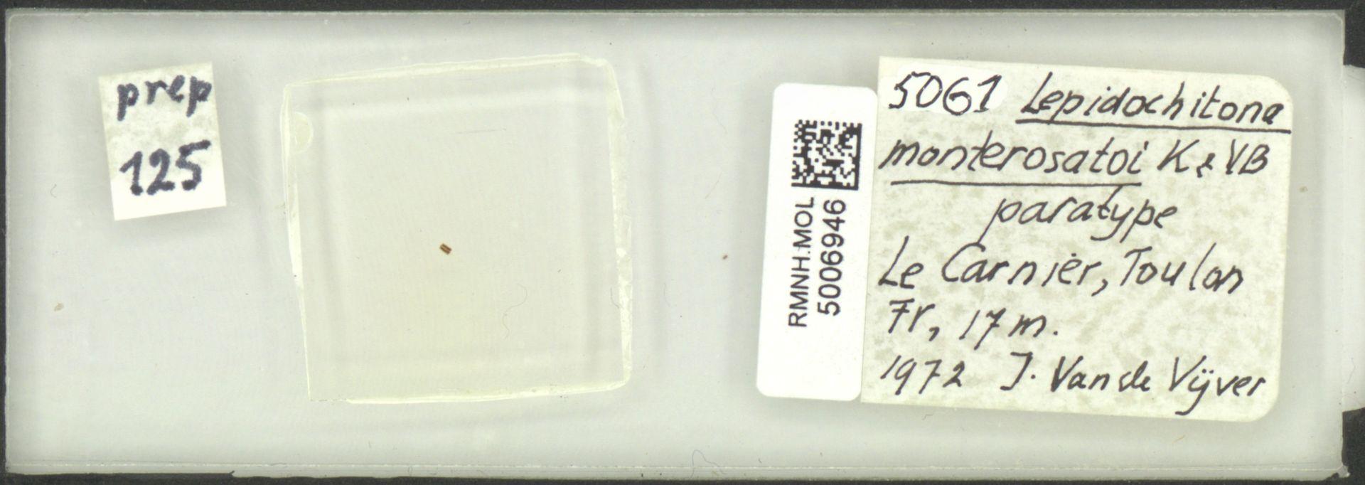 RMNH.MOL.5006946 | Lepidochitona (Lepidochitona) monterosatoi Kaas & Van Belle, 1981