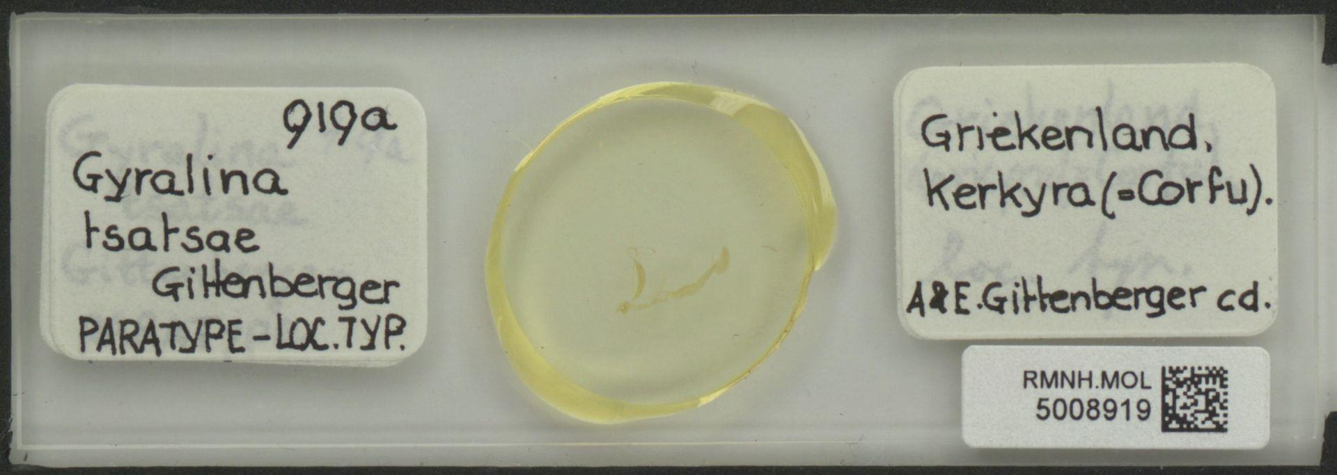 RMNH.MOL.5008919 | Gyralina tsatsae Gittenberger, 1977