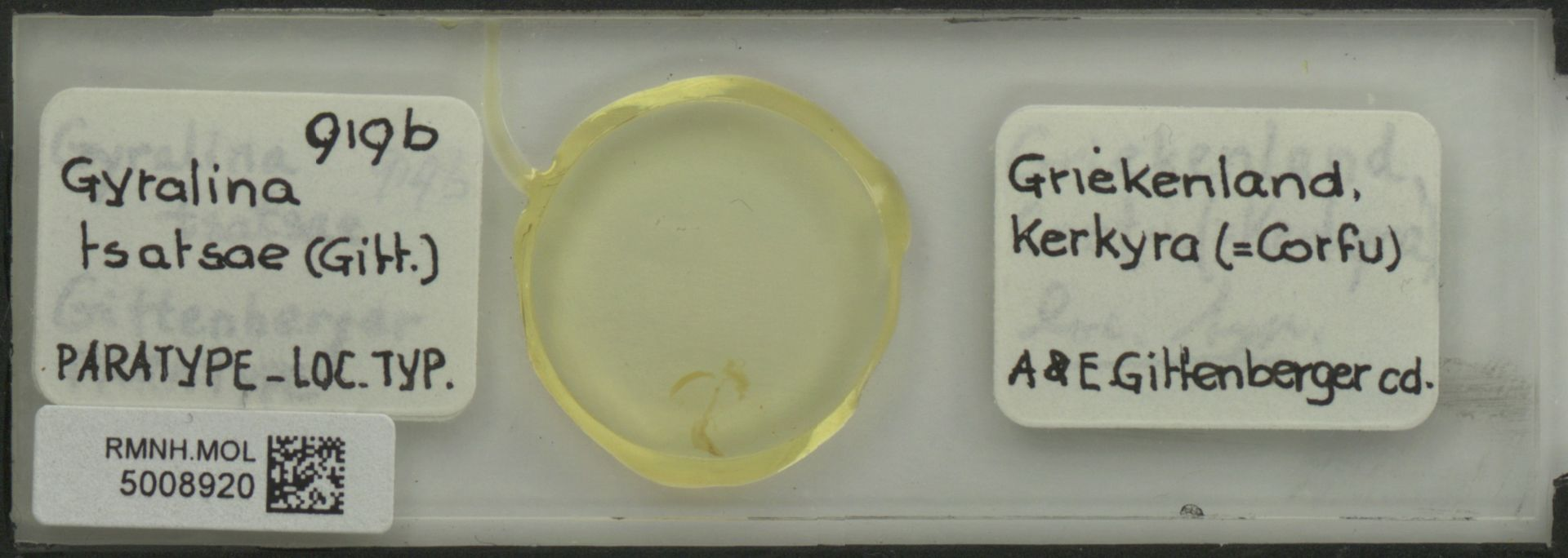 RMNH.MOL.5008920   Gyralina tsatsae Gittenberger, 1977