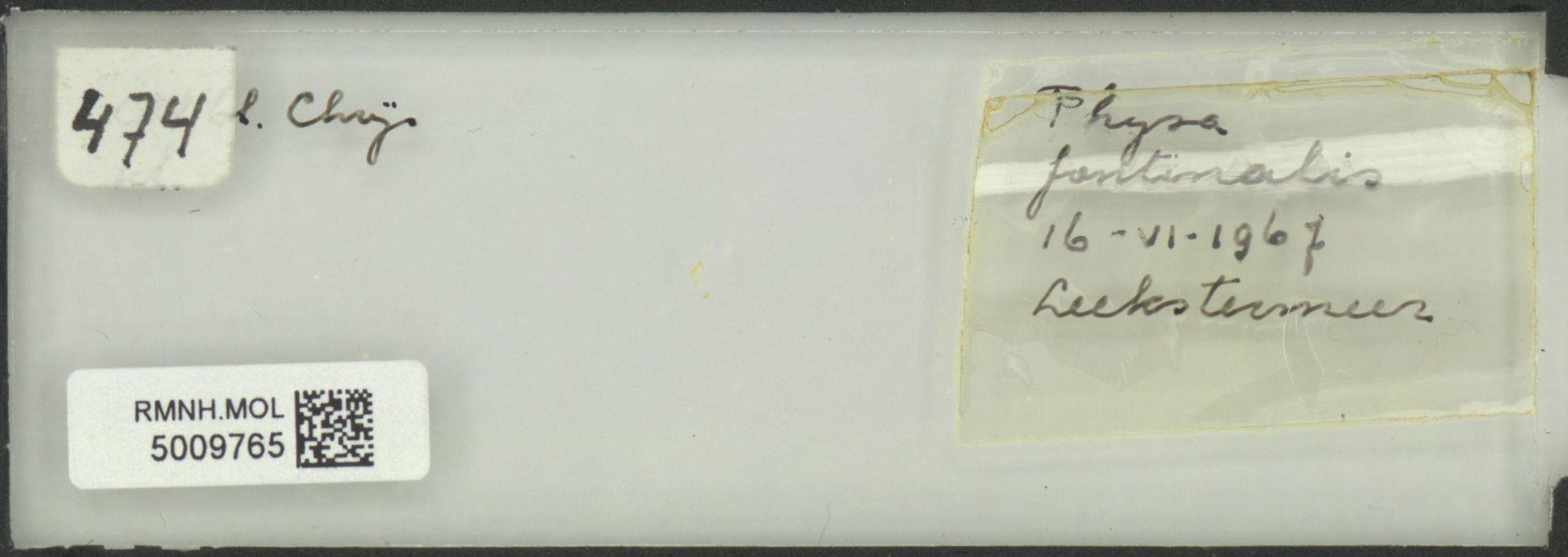 RMNH.MOL.5009765 | Physa fontinalis Linnaeus, 1758