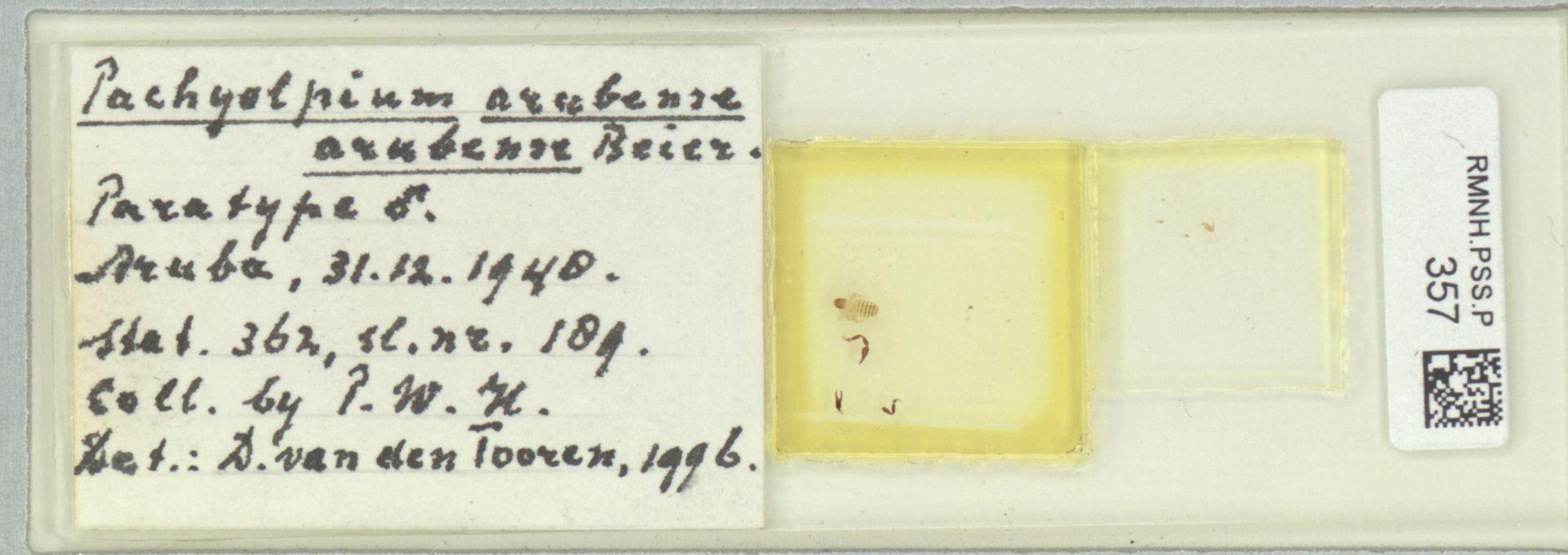 RMNH.PSS.P.357 | Pachyolpium arubense arubense