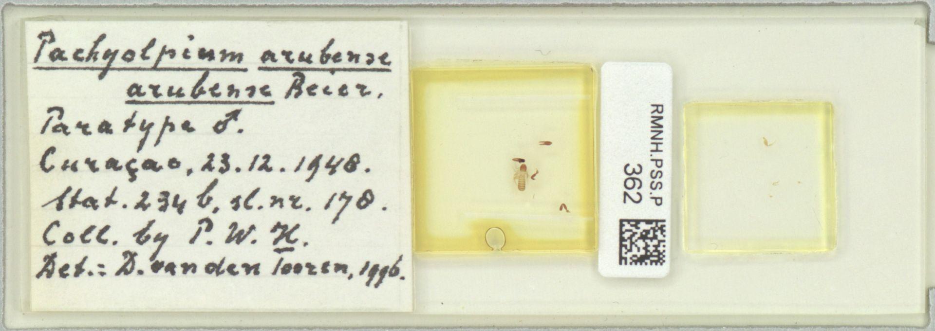 RMNH.PSS.P.362 | Pachyolpium arubense arubense