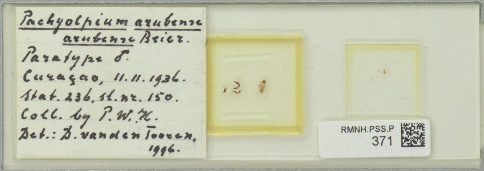 RMNH.PSS.P.371 | Pachyolpium arubense arubense