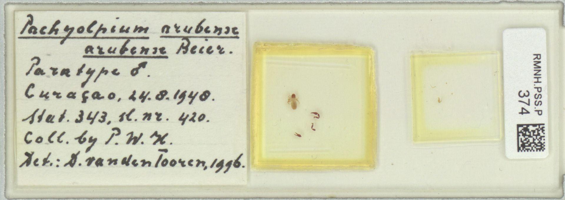 RMNH.PSS.P.374 | Pachyolpium arubense arubense