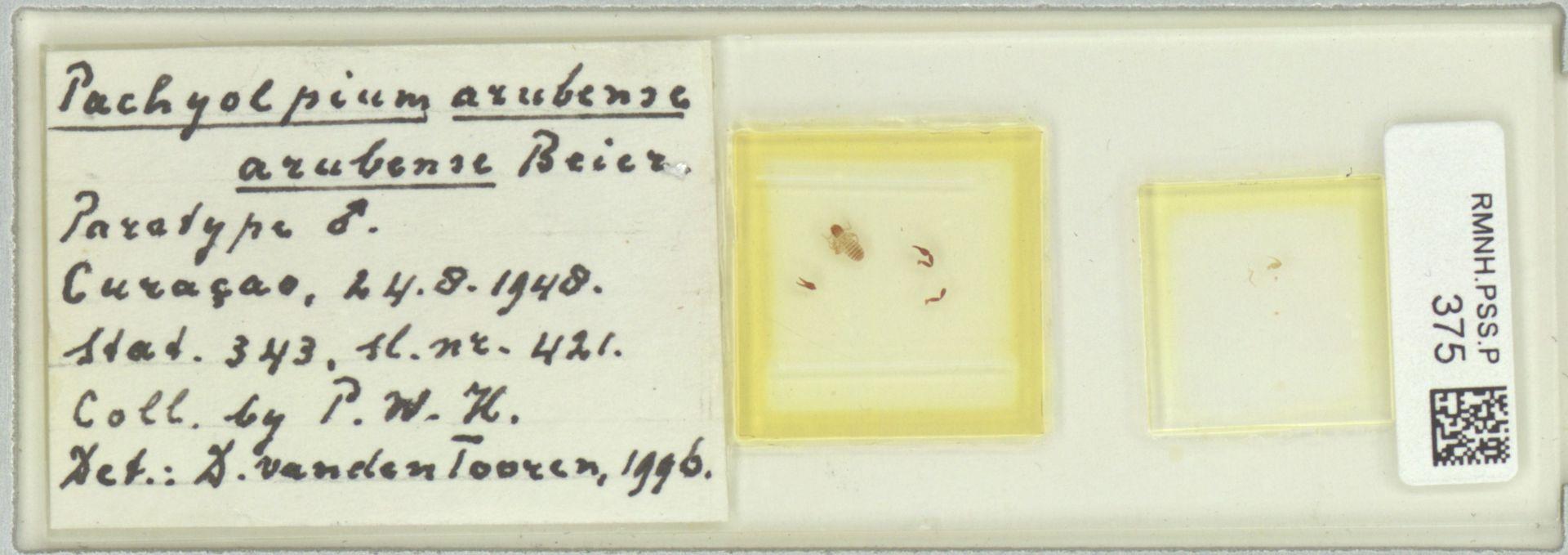 RMNH.PSS.P.375 | Pachyolpium arubense arubense