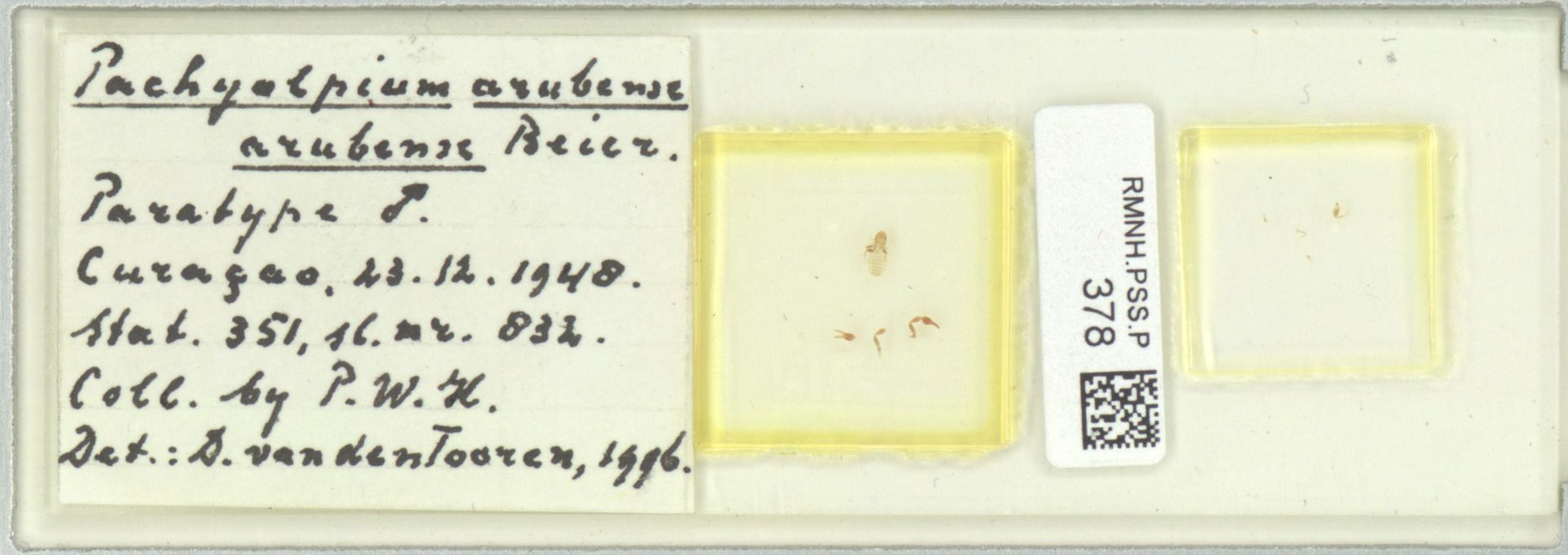 RMNH.PSS.P.378 | Pachyolpium arubense arubense