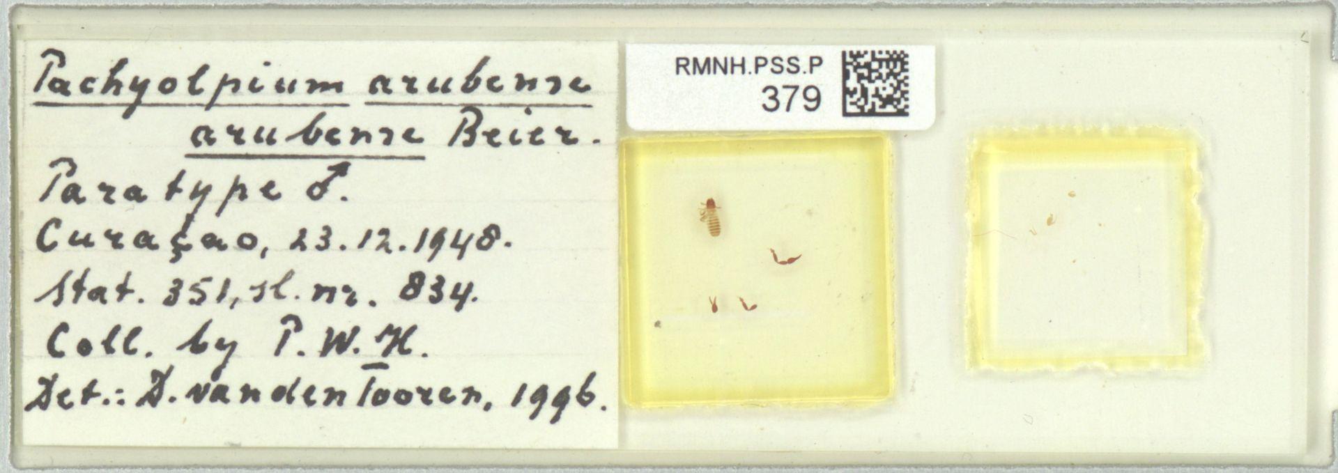 RMNH.PSS.P.379 | Pachyolpium arubense arubense