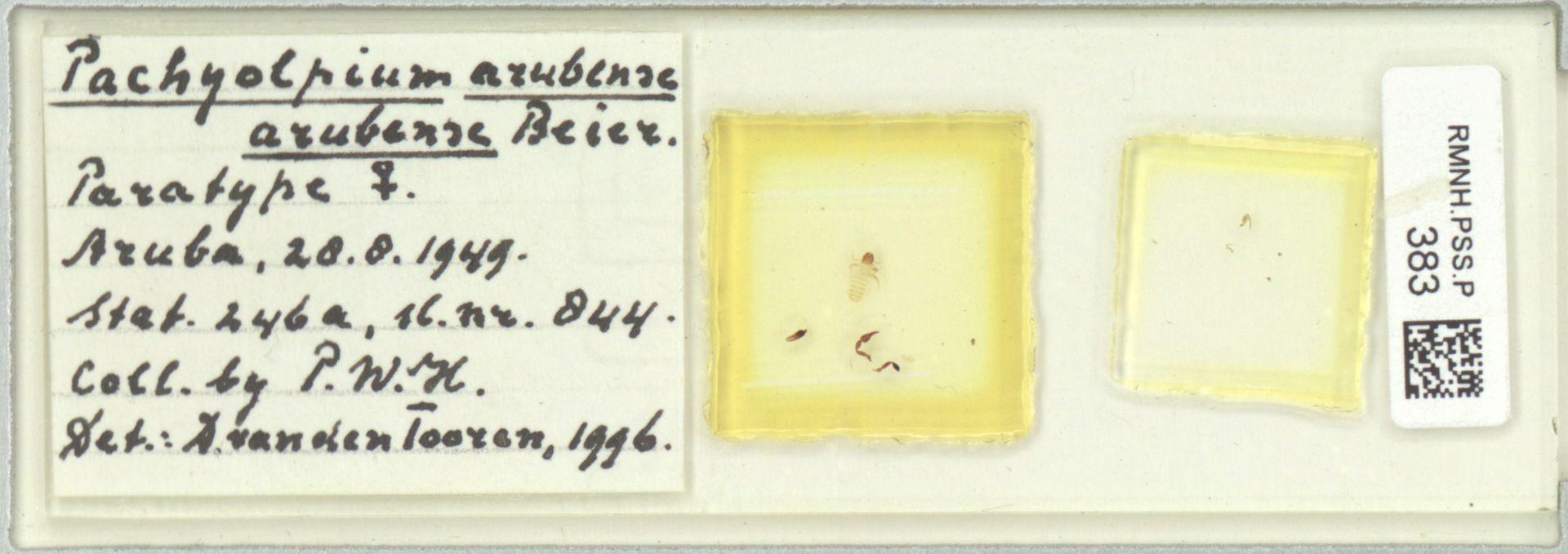 RMNH.PSS.P.383 | Pachyolpium arubense arubense