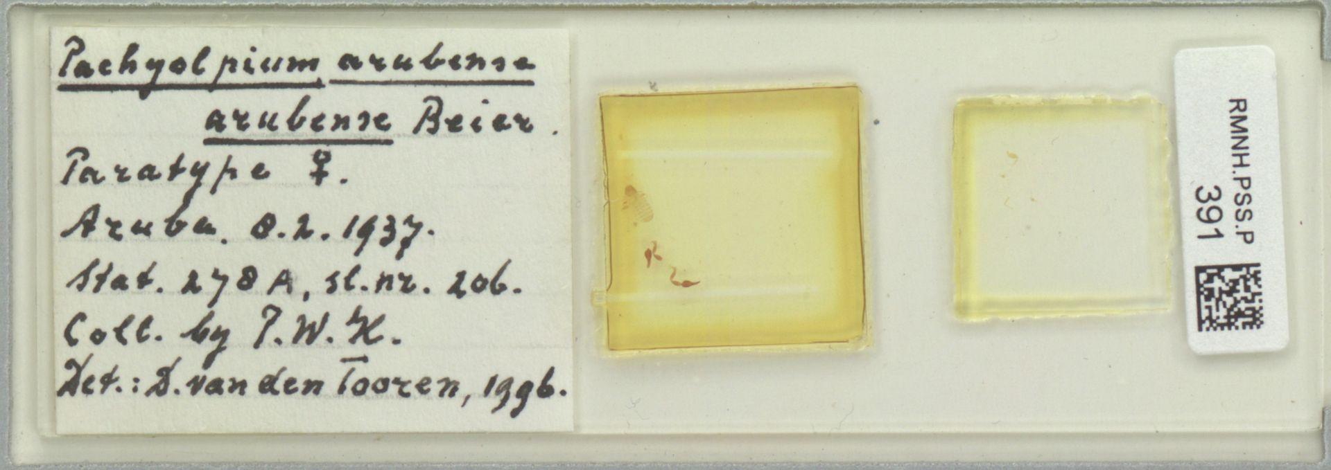 RMNH.PSS.P.391   Pachyolpium (arubense) arubense