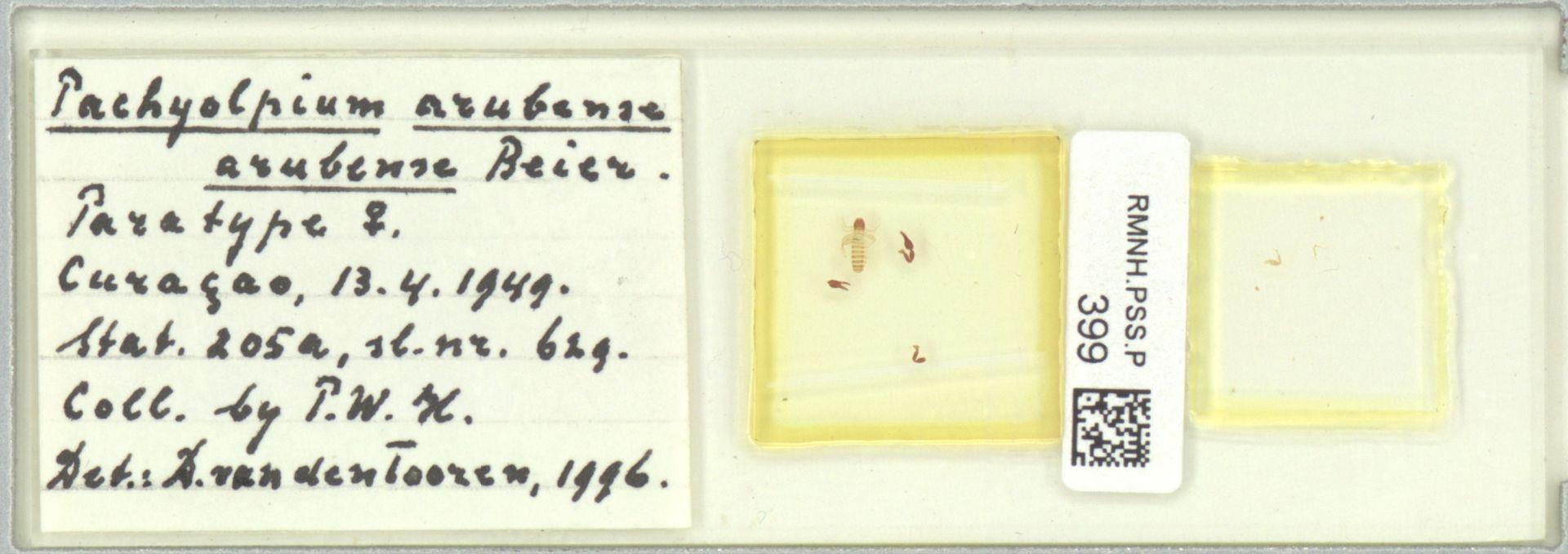 RMNH.PSS.P.399 | Pachyolpium (arubense) arubense