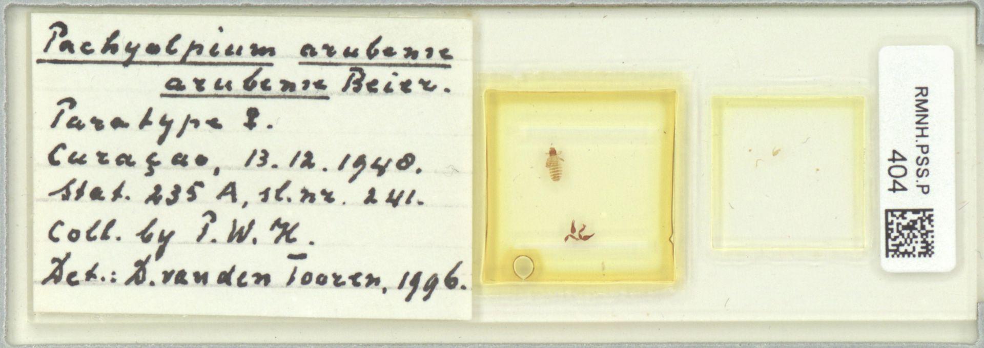 RMNH.PSS.P.404 | Pachyolpium (arubense) arubense