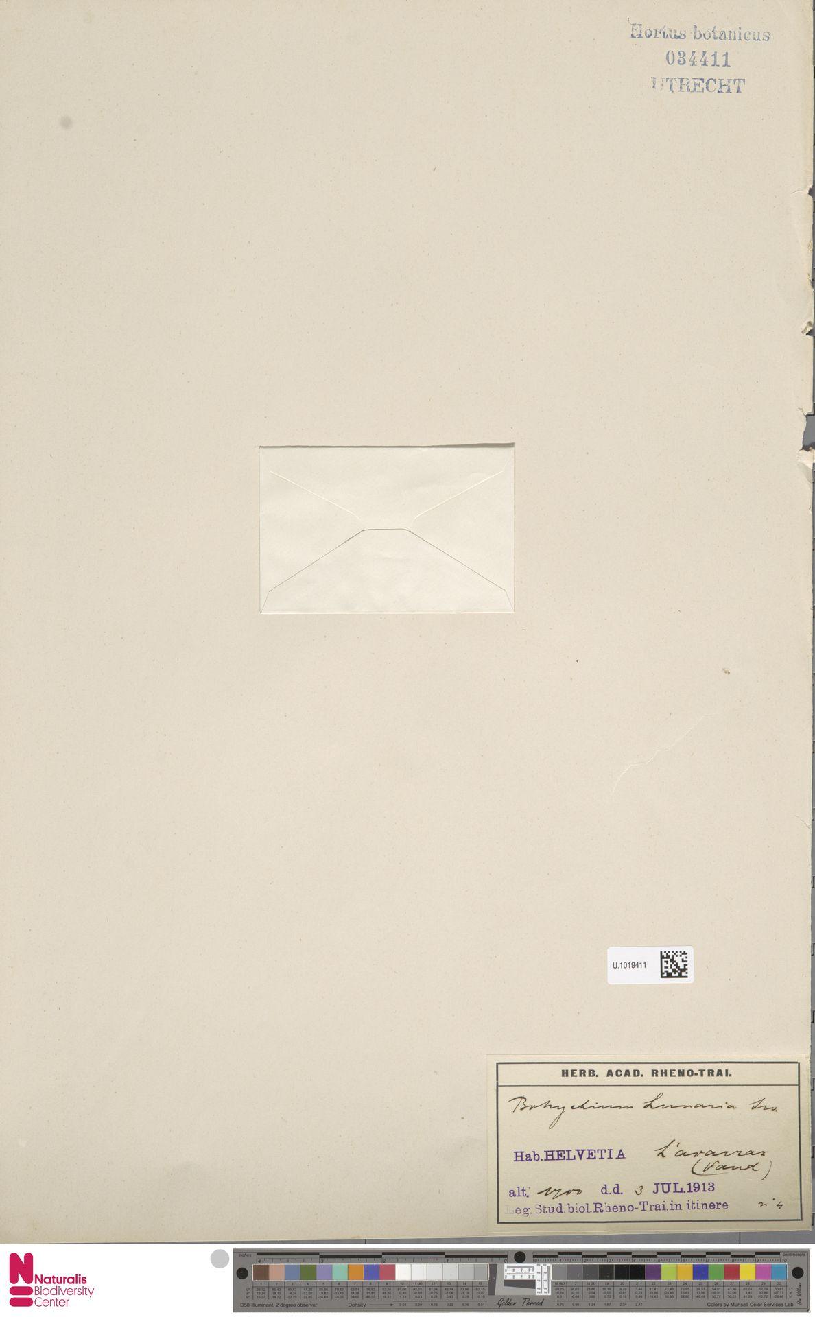 U.1019411 | Botrychium lunaria (L.) Sw.