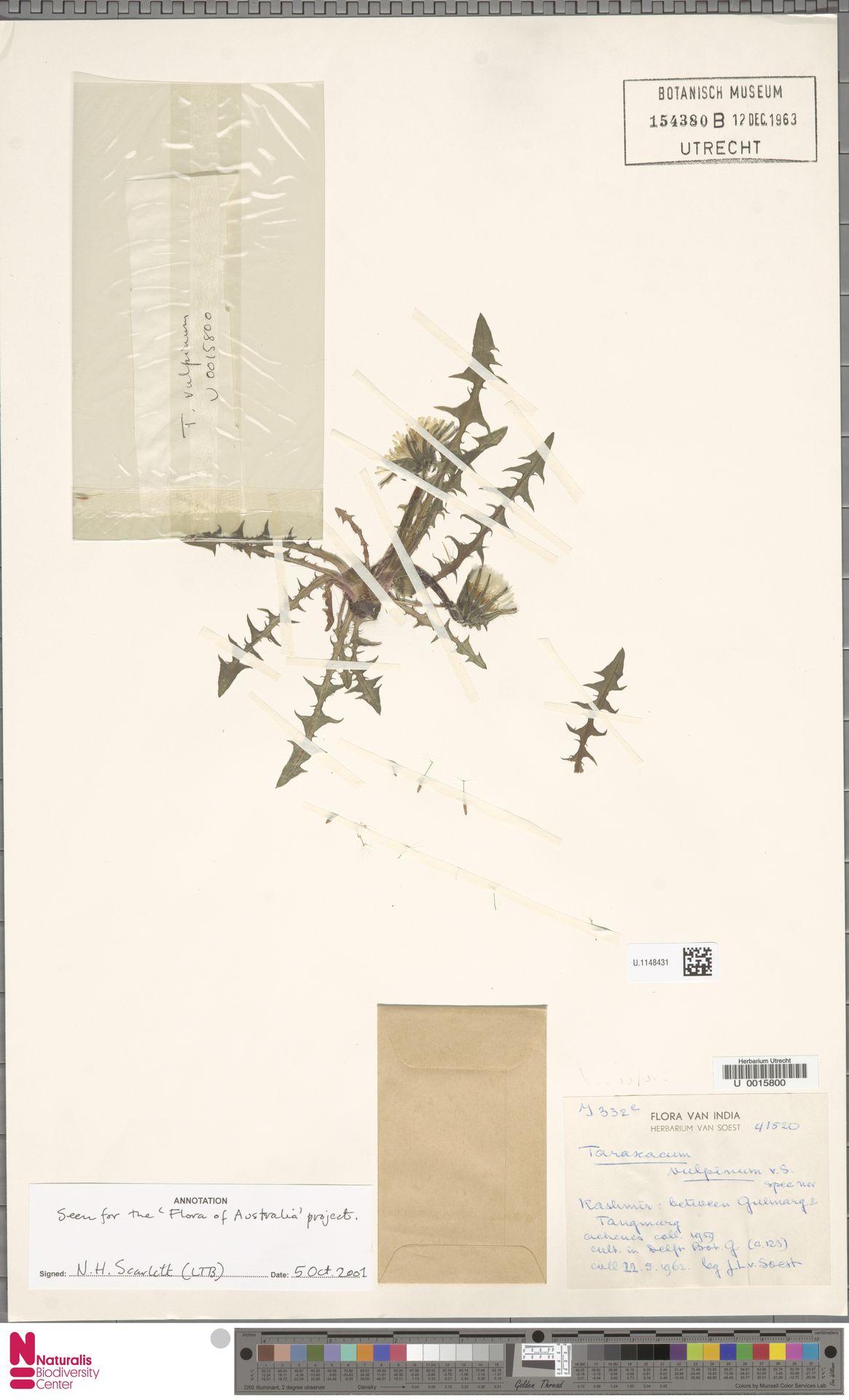 U.1148431 | Taraxacum vulpinum Soest