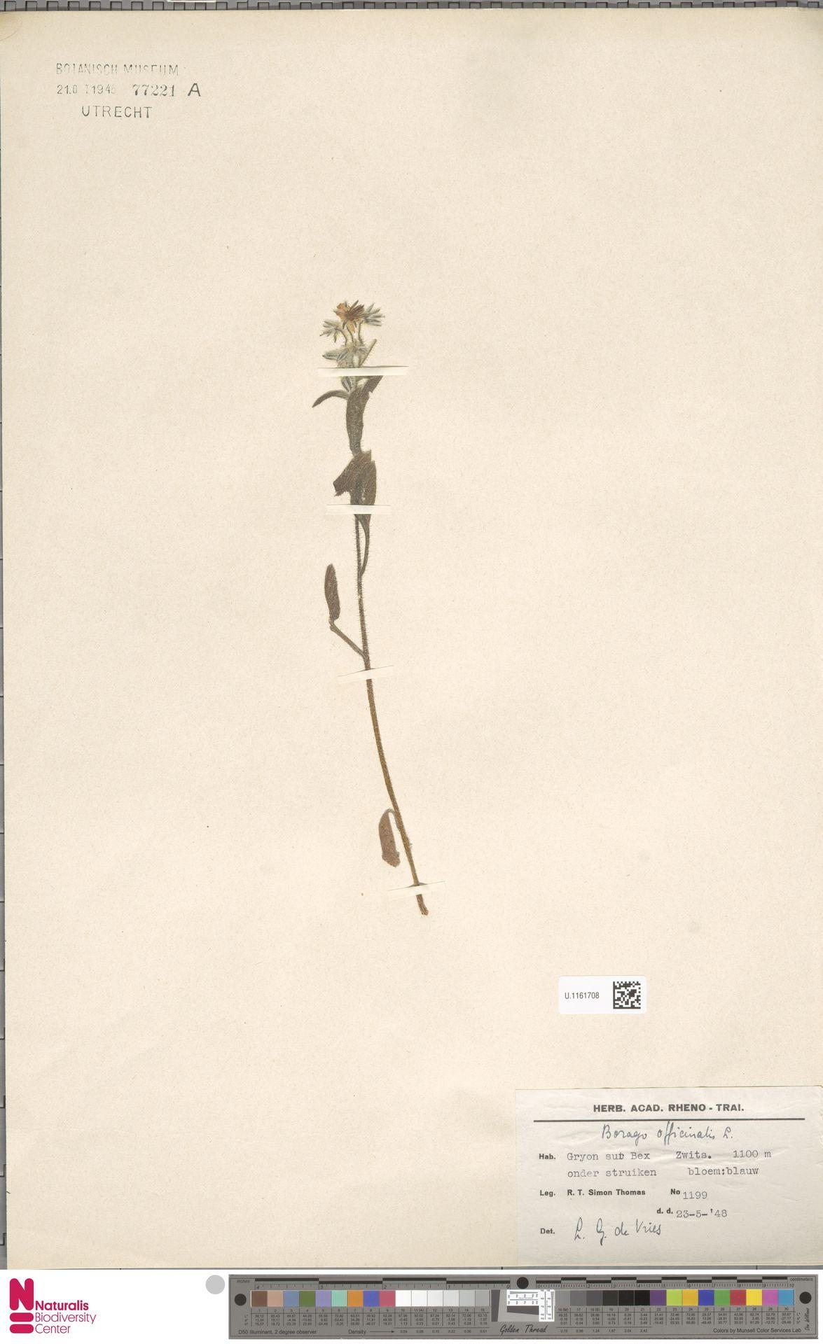 U.1161708 | Borago officinalis L.