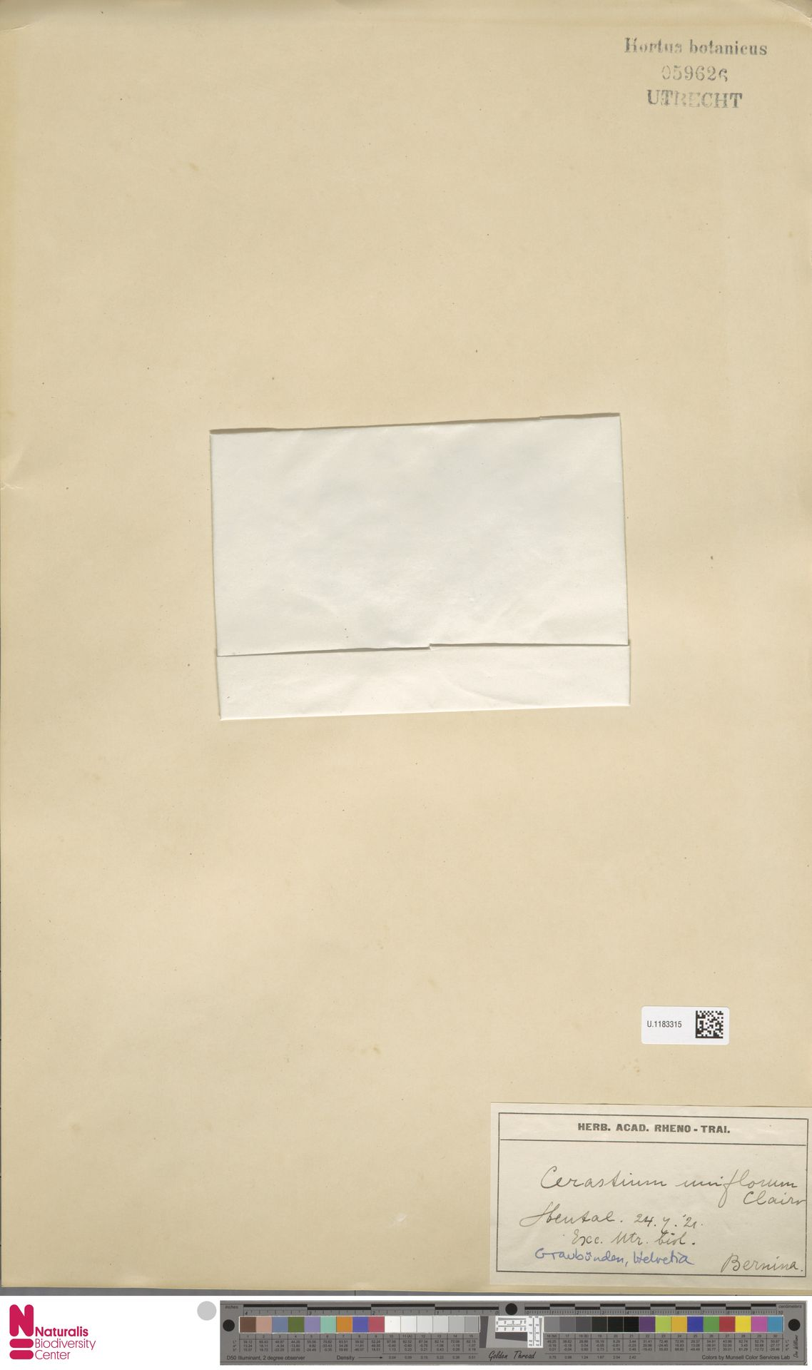 U.1183315 | Cerastium uniflorum Clairv.
