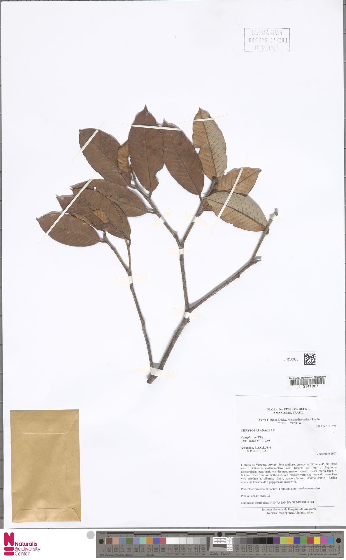 U.1206935 | Couepia ulei Pilg.