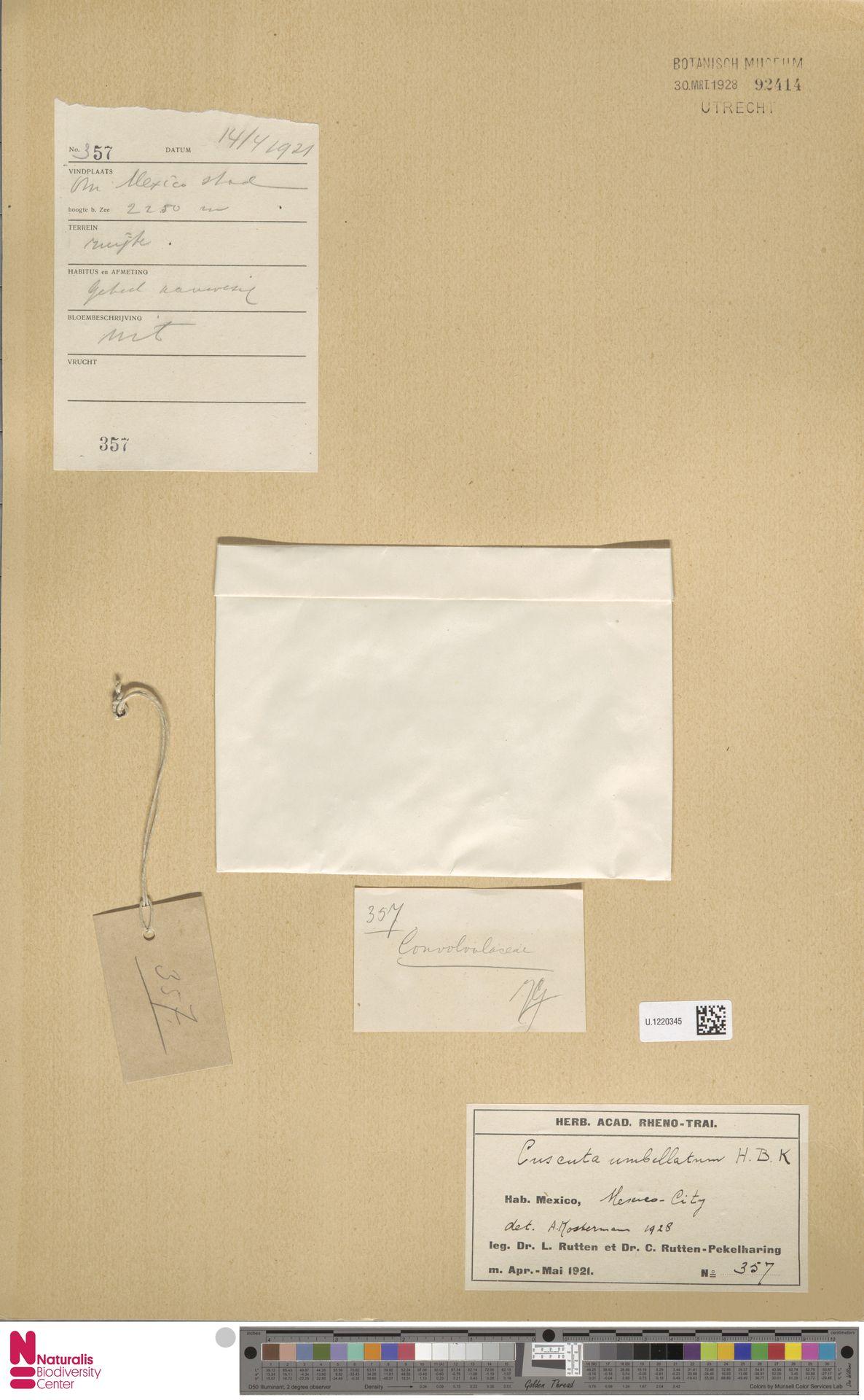 U.1220345 | Cuscuta umbellata Humb., Bonpl. & Kunth