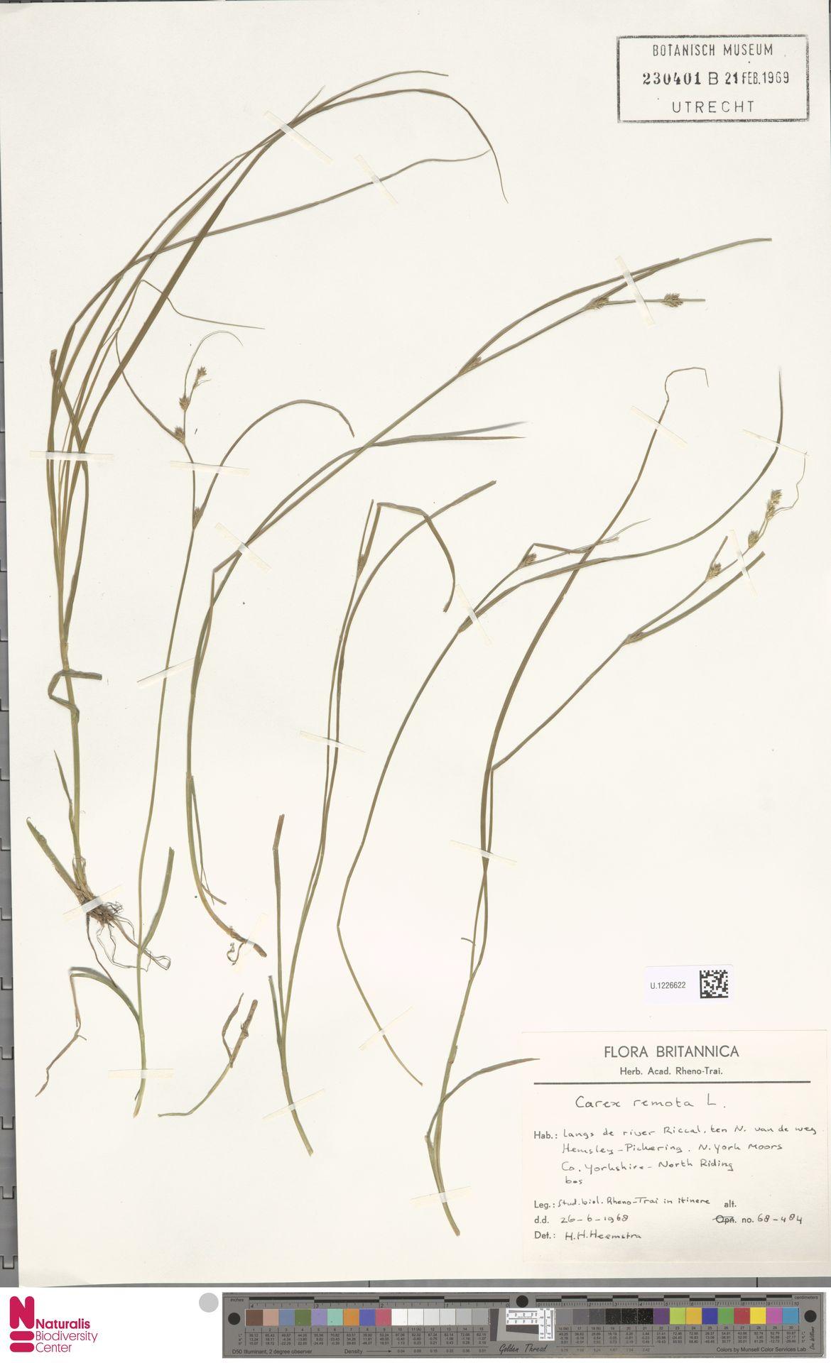 U.1226622 | Carex remota L.