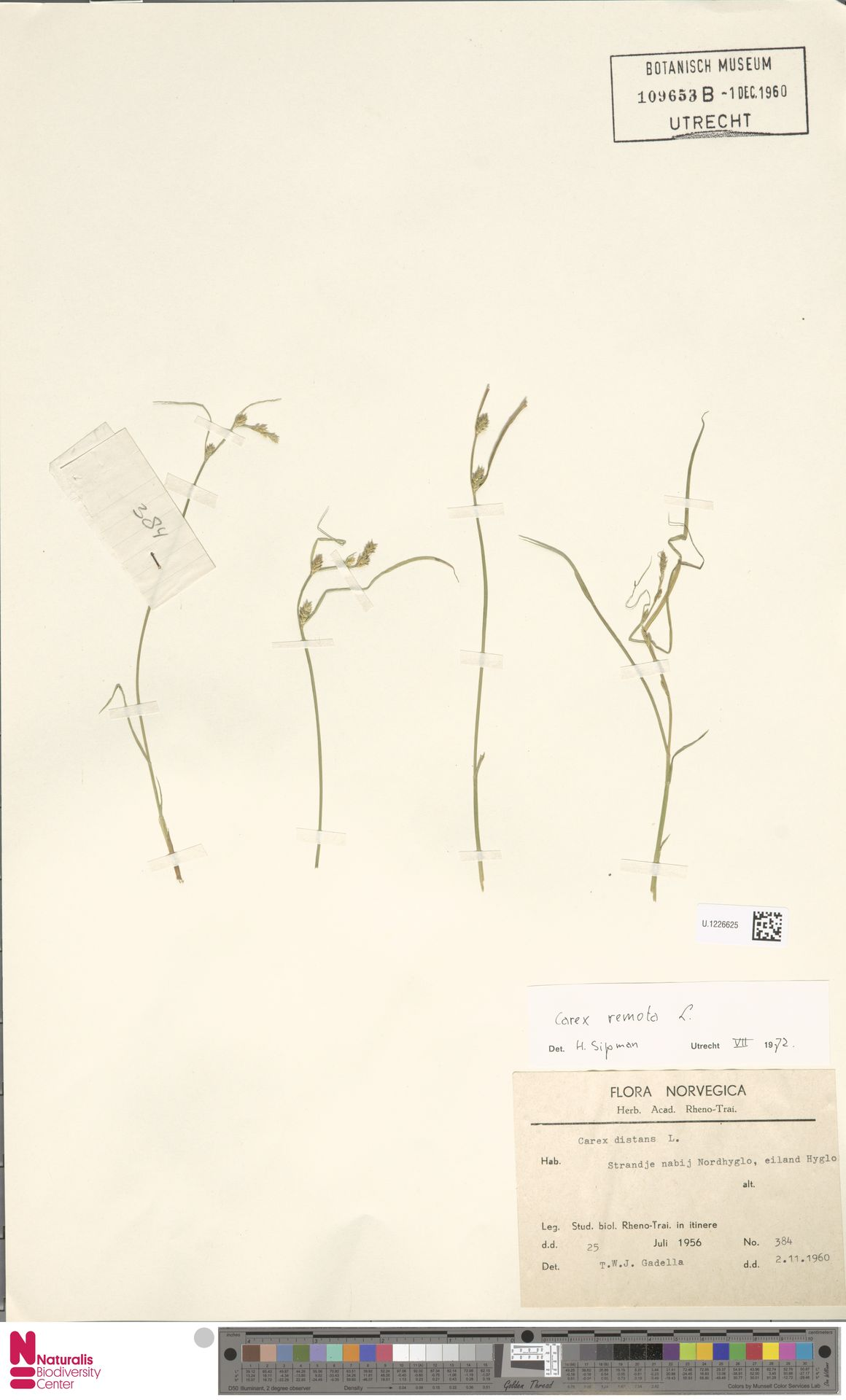 U.1226625 | Carex remota L.
