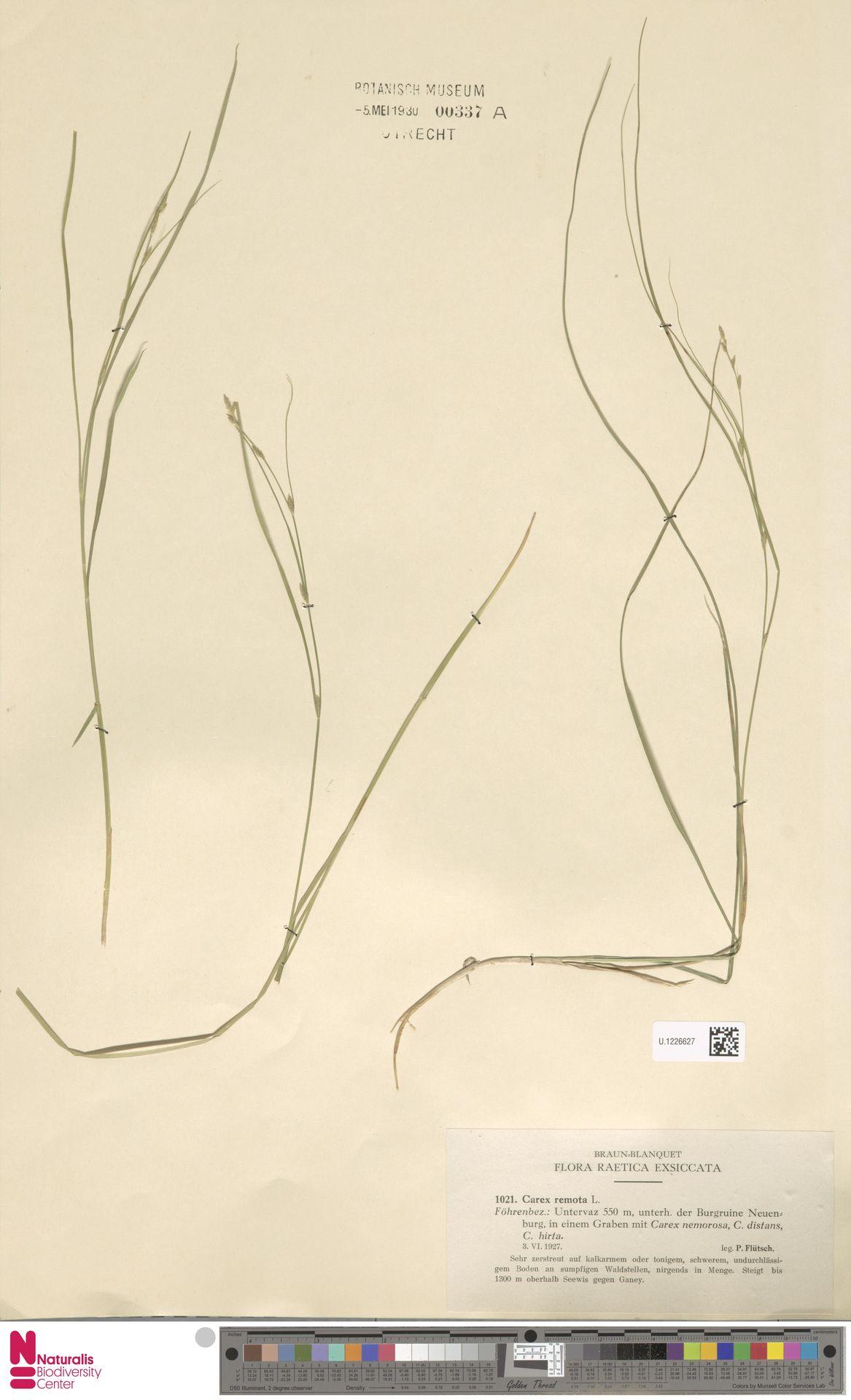 U.1226627 | Carex remota L.