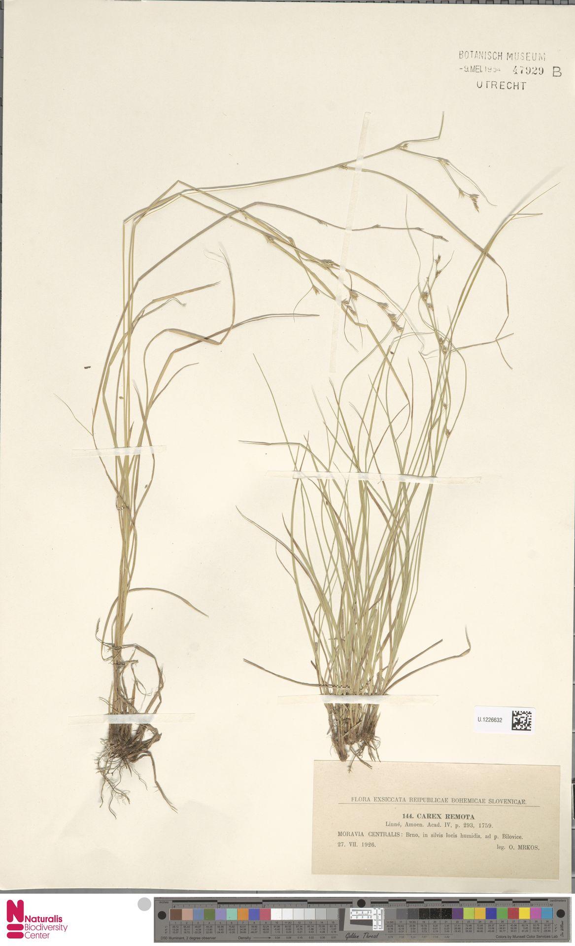 U.1226632 | Carex remota L.
