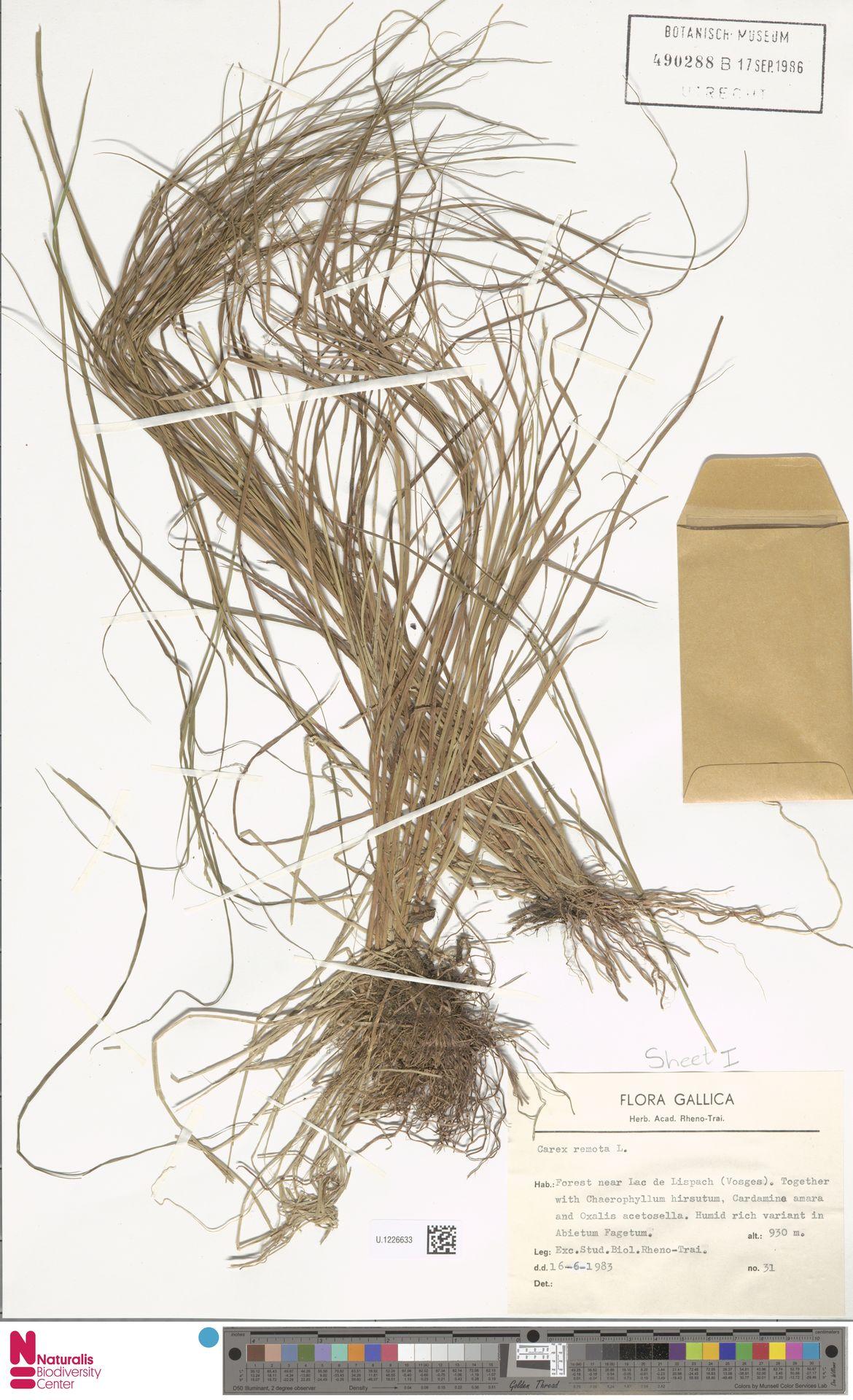 U.1226633 | Carex remota L.