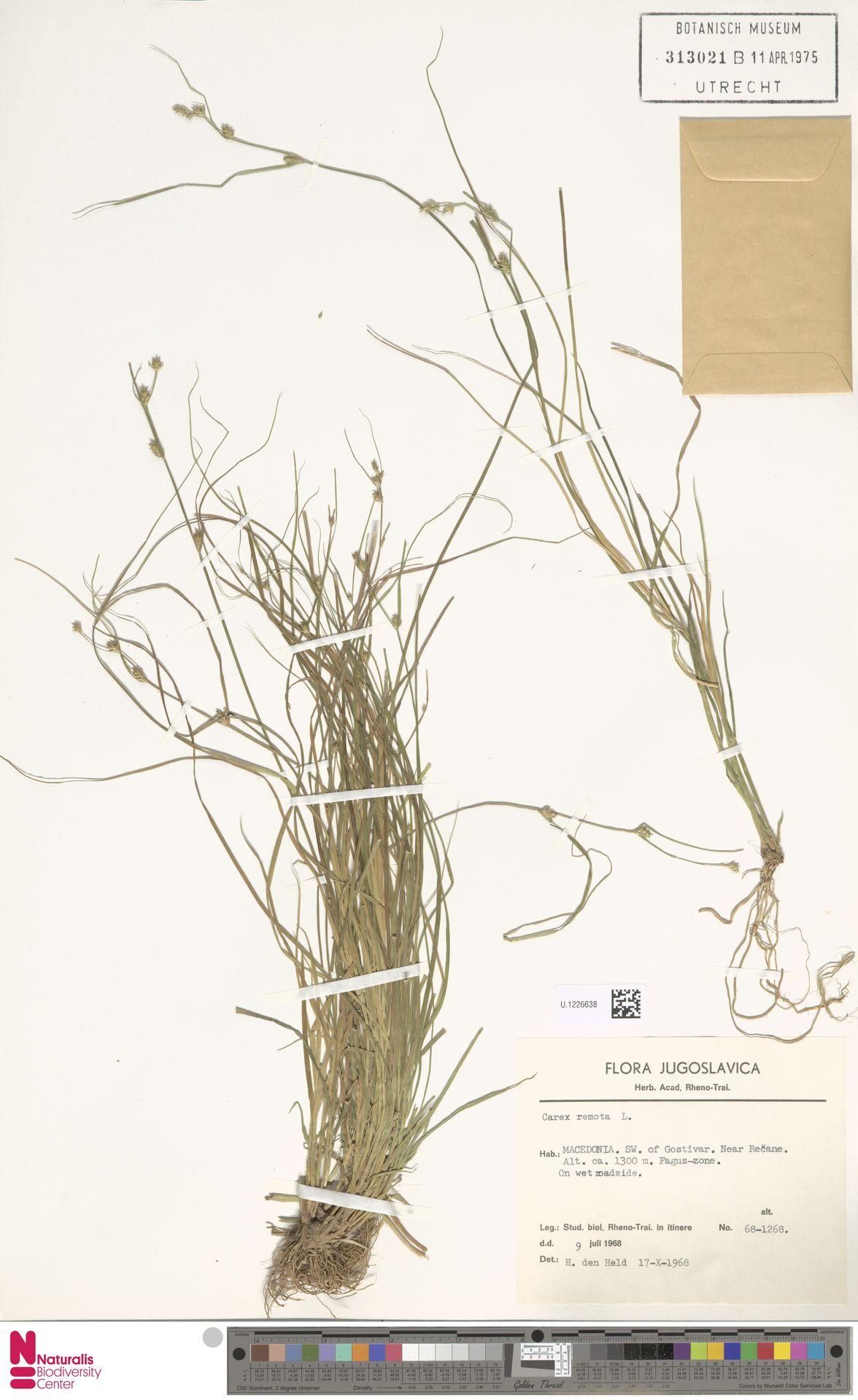 U.1226638 | Carex remota L.
