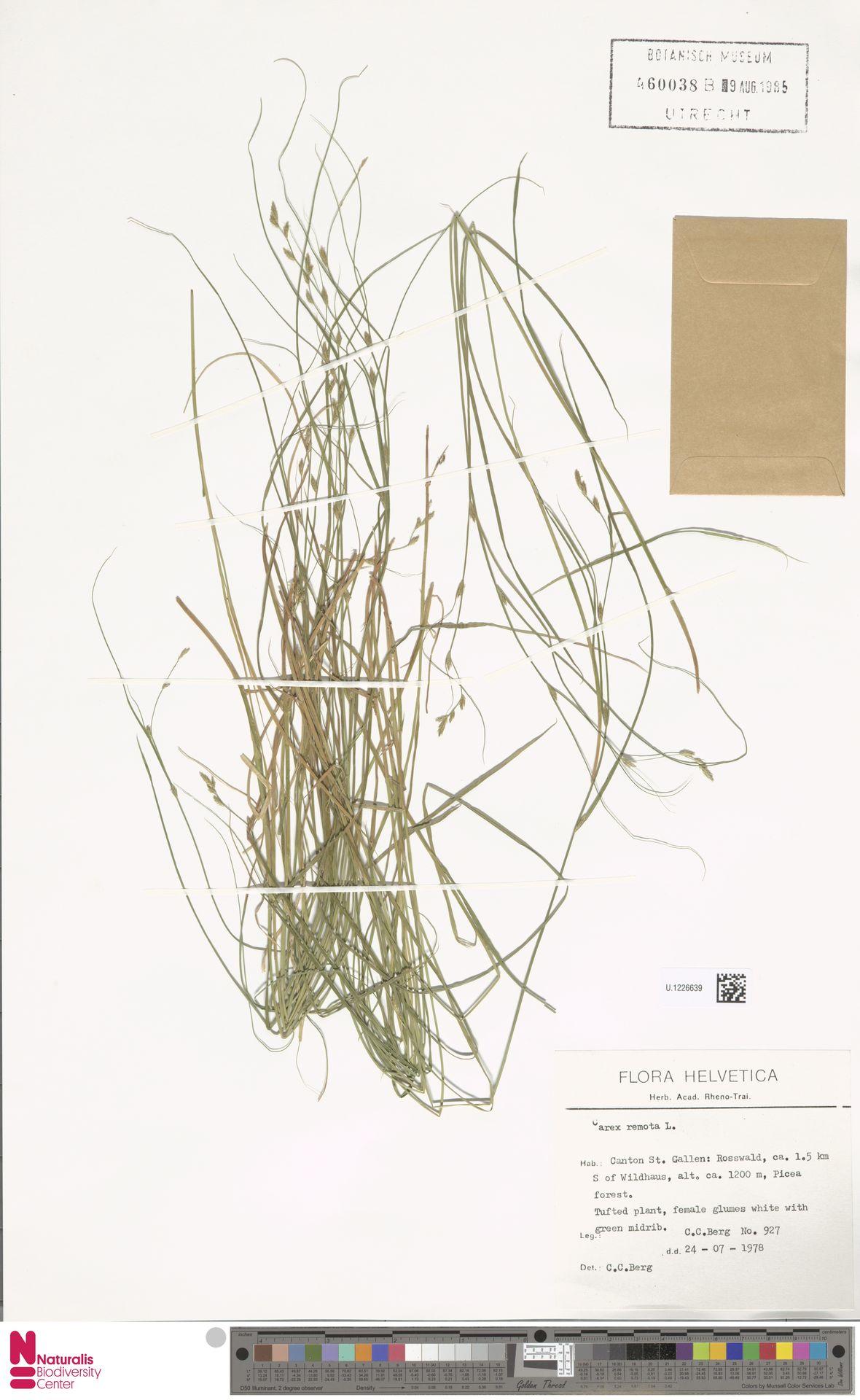 U.1226639 | Carex remota L.
