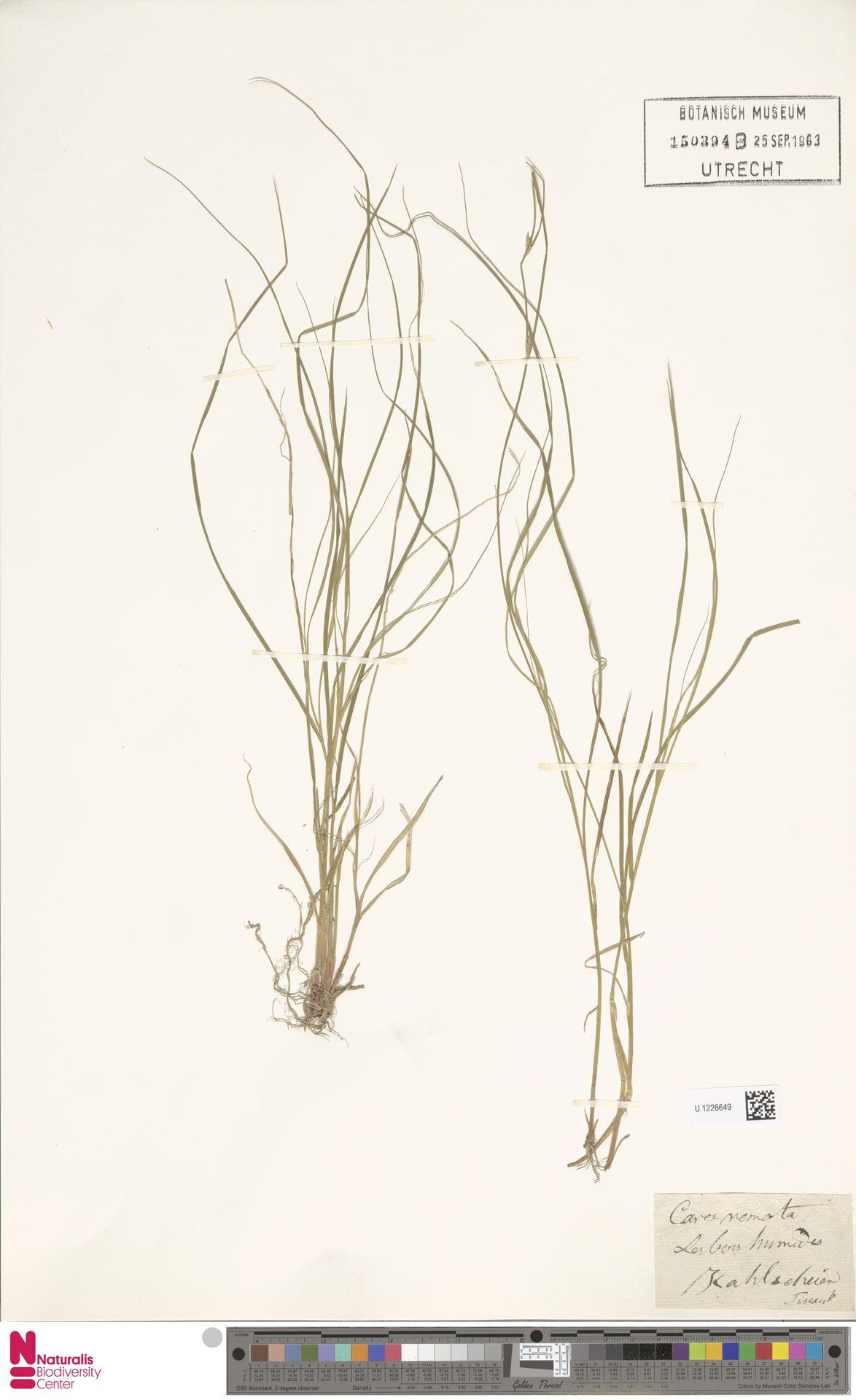 U.1226649 | Carex remota L.