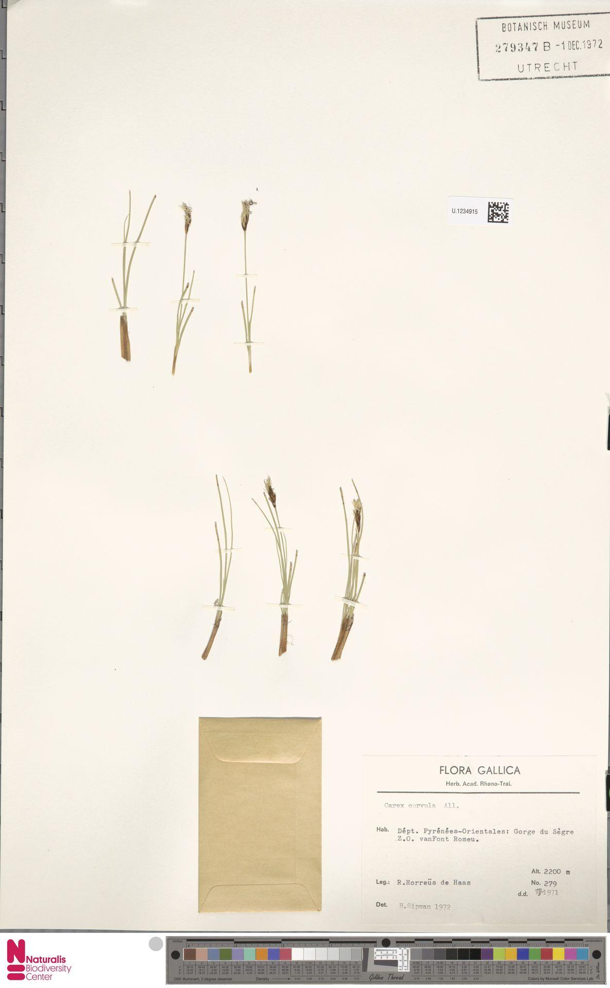 U.1234915 | Carex curvula All.