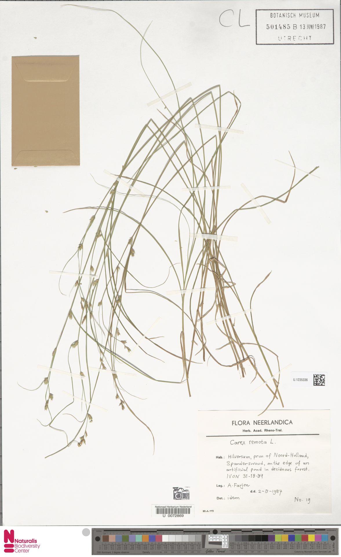 U.1235336 | Carex remota L.