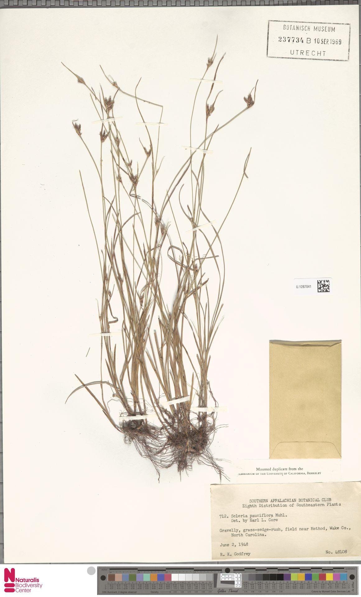 U.1287041 | Scleria pauciflora Muhl. ex Willd.