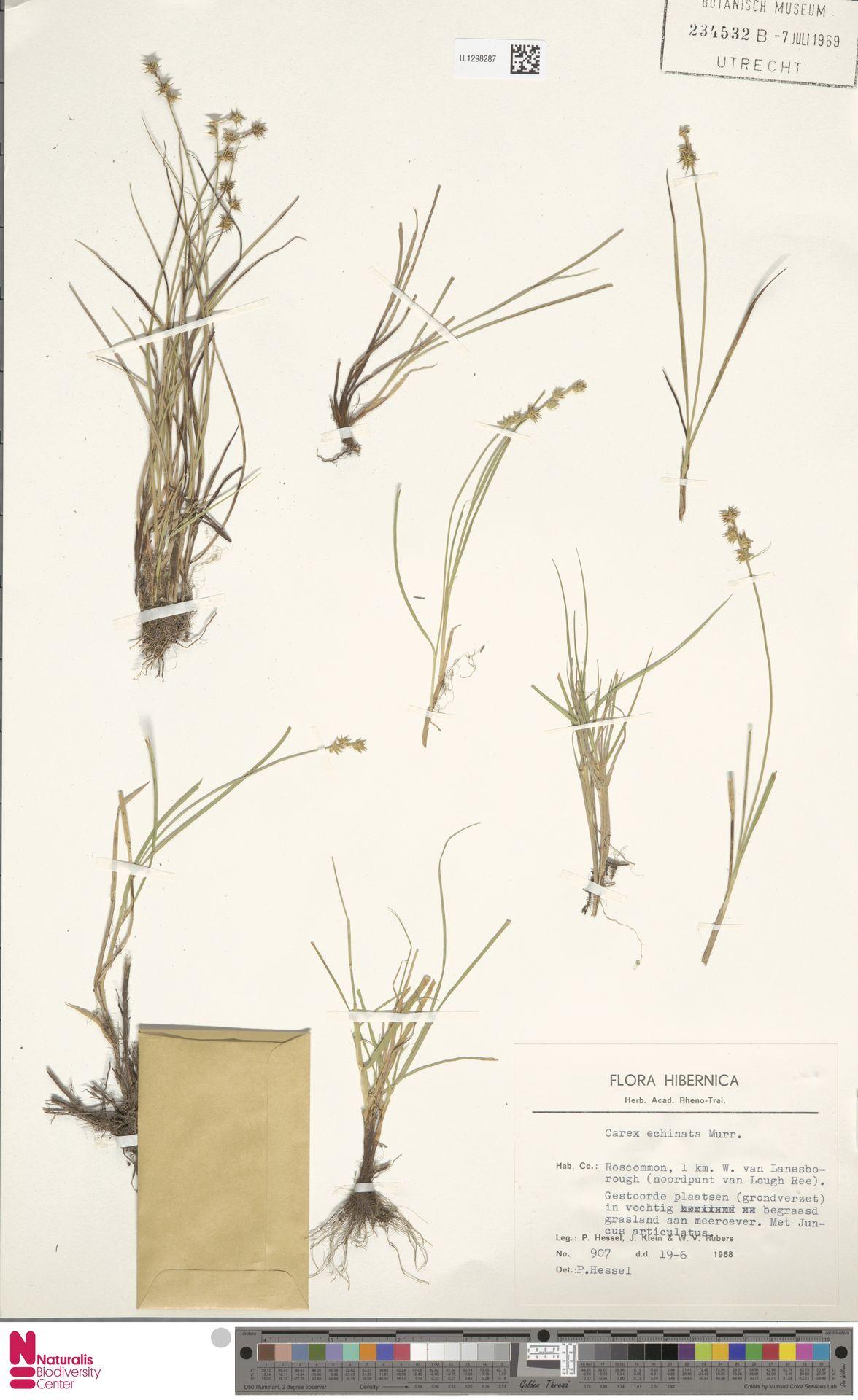 U.1298287   Carex echinata Murray
