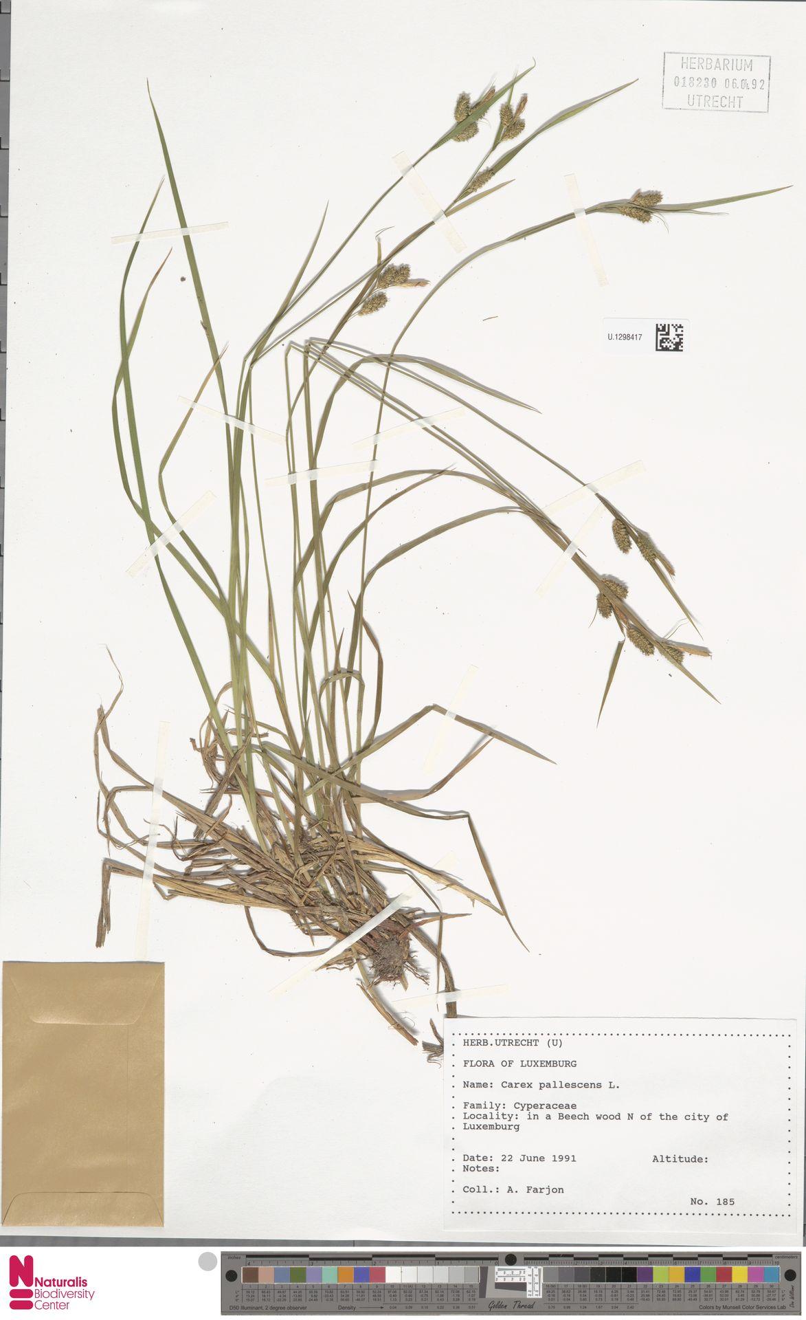 U.1298417   Carex pallescens L.
